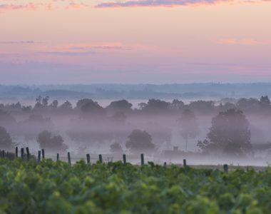 L'automne dans le Vignoble de Nantes peut vous surprendre!