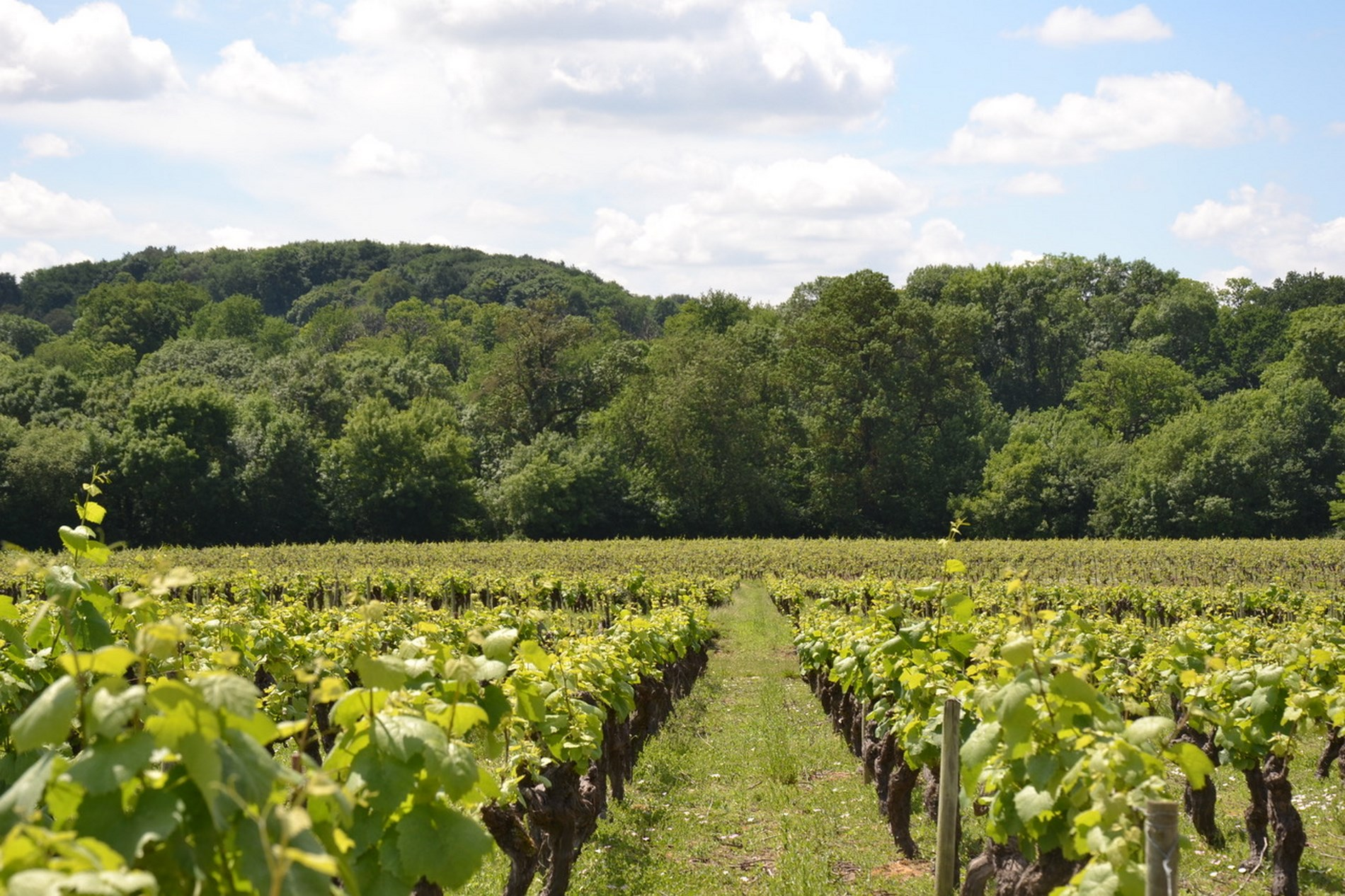 Sillonnez Le Vignoble Avec Les Routes Des Vins Du Val De Loire Voyage Dans Nantes Et Panoramas Pour Voyages Ponctus