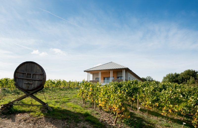 2018GT-oenotourisme-vignoble-Marchais-thouare-44-levignobledenantes-tourisme