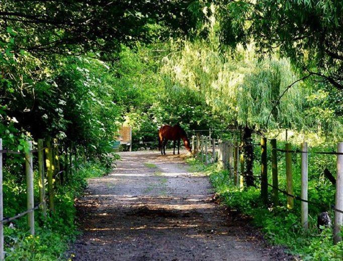 balade-cheval-vignes-en-selle-sm-st-crespin-moine-anjou