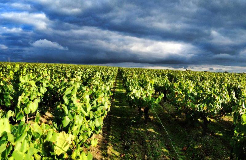 domaine-de-l-ecu-les Vignes-le-landreau-44