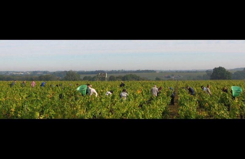 2015-degustations-famille-lieubeau-chateau-thebaud-44-DEG–Vendanges Aulnaye