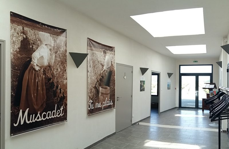 2019-accueil-domaineraphaëlluneau-lelandreau-44-vignobledenantes