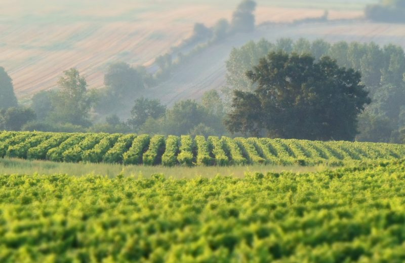 2019-vignerons-oenotourisme-freres-couillaud2-la-regripiere-levignobledenantes