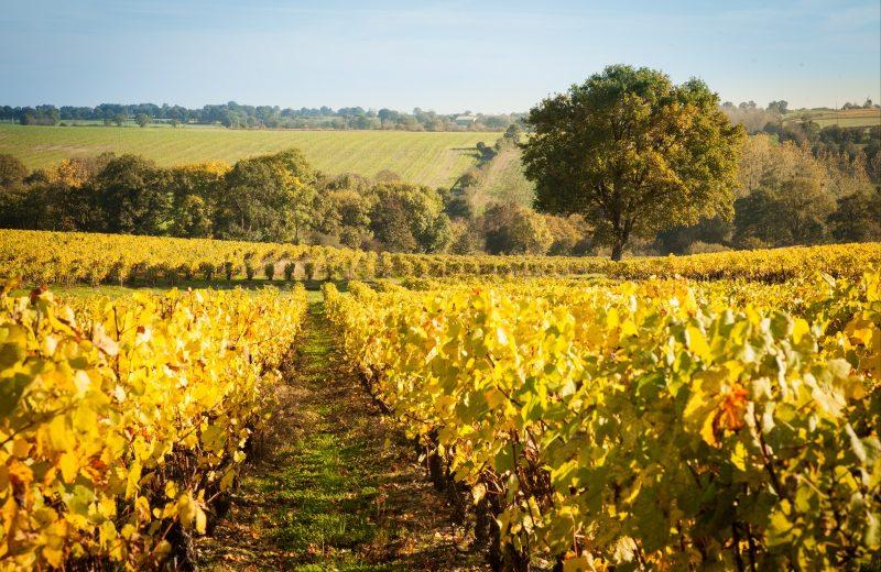 2019-vignerons-oenotourisme-freres-couillaud3-la-regripiere-levignobledenantes