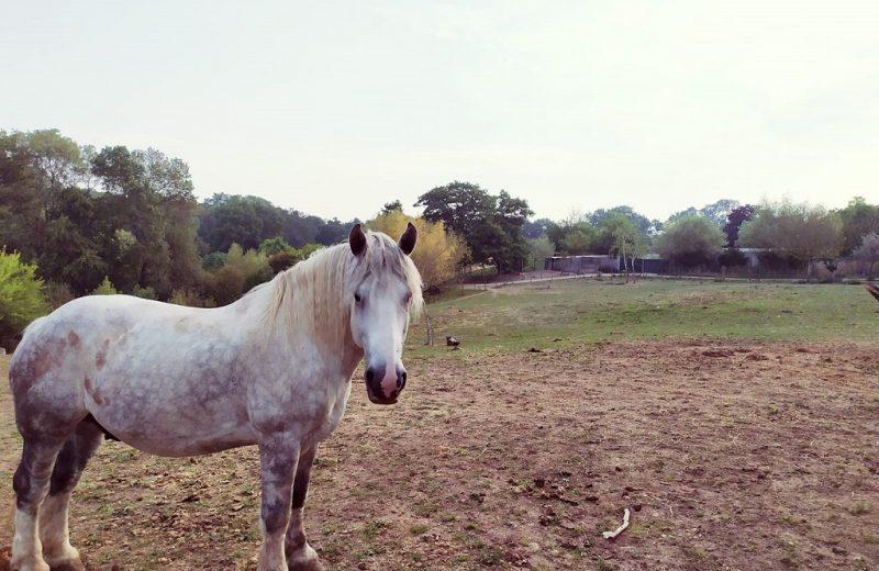 balade-cheval-poney-vignes-en-selle-sm-st-crespin-moine-anjou