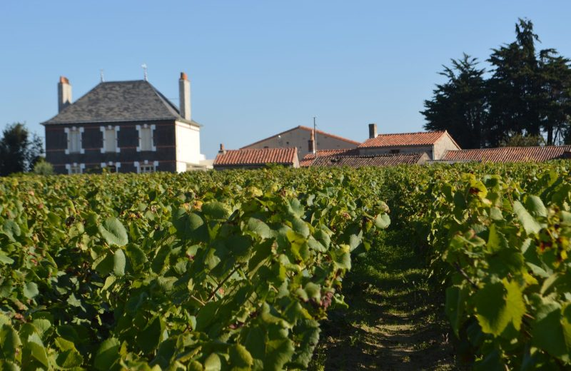 2018-domaine-chauviniere5-chateau-thebaud-44-levignobledenantes-tourisme