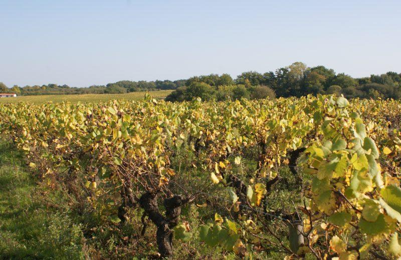 2018-domaine-poiron-dabin-chateau-thebaud-44-levignobledenantes-tourisme