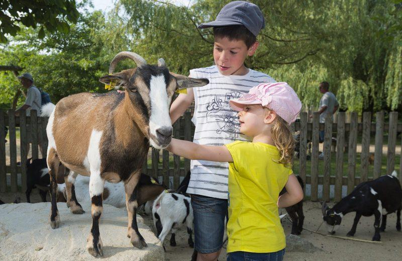 2018-Zoo4-boissiere-dore-44-levignoblenantes-tourisme