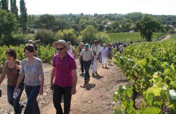 GuideGroupe2018-randonnee-patrimoine-vignoble-bords-de-moine-clisson-levignobledenantes
