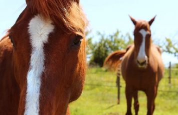 stage-cheval -vignes-en-selle-nantes-cholet-sevremoine-anjou