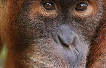 2018GT-Zoo-boissiere-dore-44-levignoblenantes-tourisme
