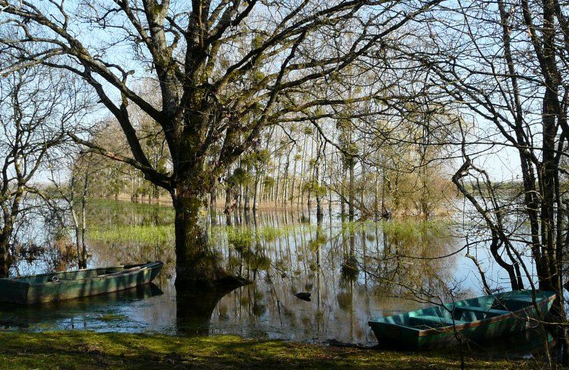 Barques sur le marais