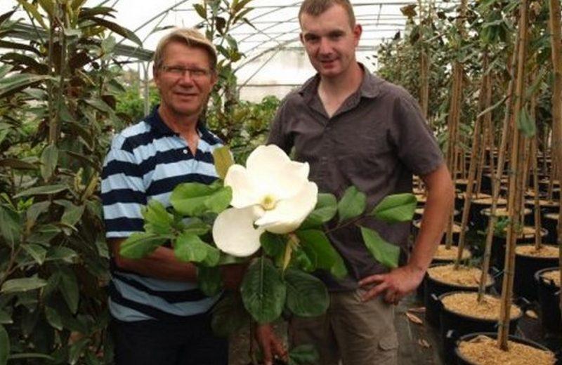 Pepiniere journee groupes magnolias et plantes d'Amerique.