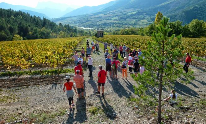 Pique-nique-vigneron1-levignobledenantes-2