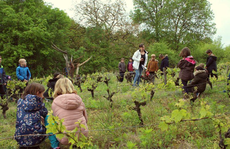 Raconte-moi les vignes offre sjuniors le vignoble de nantes