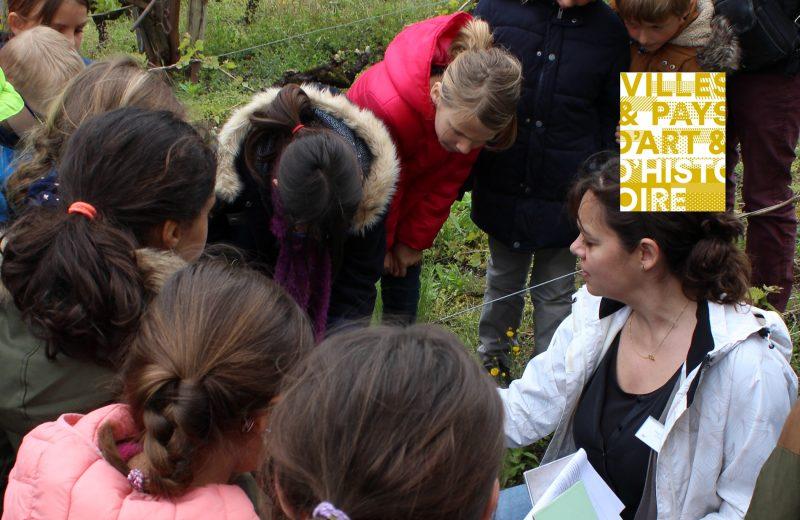 atelier-plantation-cep-musee-vignoble-nantais-scolaires-loisirs-2019-2020-3