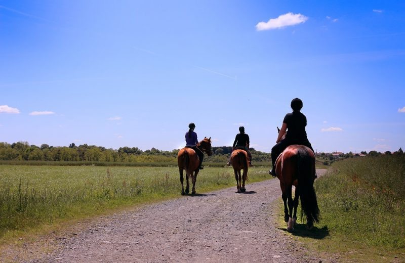 balade-cheval-vignes-en-selle-sevremoine-saint-crespin-sur-moine-cholet-nantes