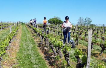 balade gyropode dans les vignes activites gorupes adultes le vignoble de nantes