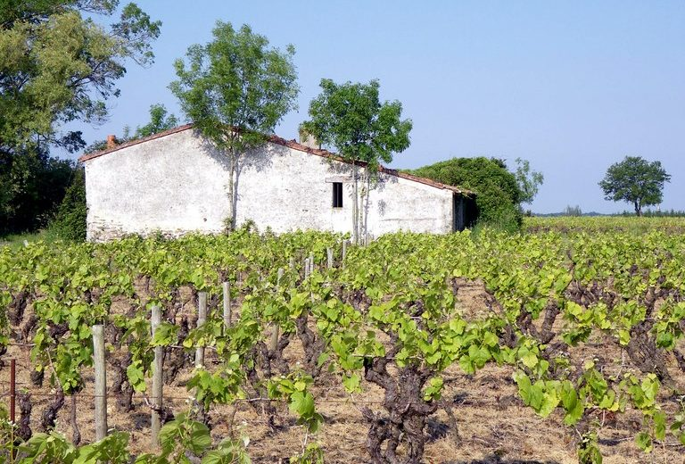 circuit-boucle-pedestre-vigners-en-villages-la-haye-fouassiere-44-ITI  (1)
