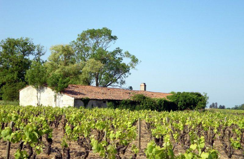 circuit-boucle-pedestre-vigners-en-villages-la-haye-fouassiere-44-ITI  (6)