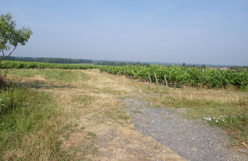 circuit-chateau-noe-vallet-levignobledenants-tourisme(4)