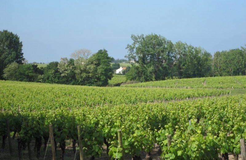 circuit-coteaux-vallet-levignoblenantes-tourisme (2)