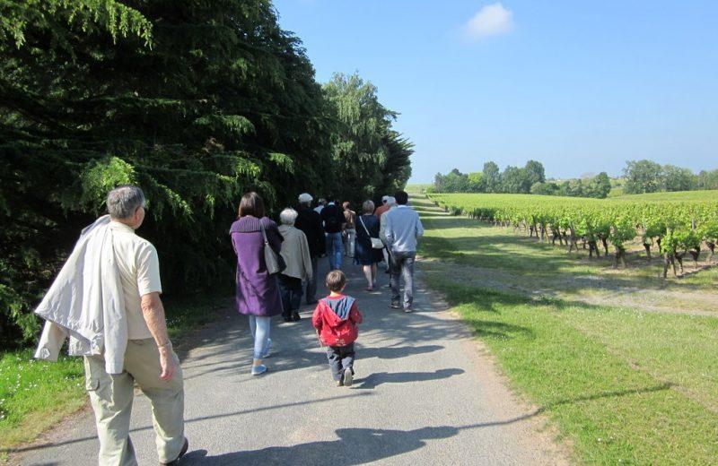 circuit-coteaux-vallet-levignoblenantes-tourisme (3)