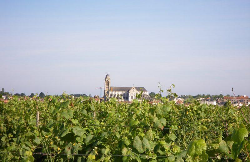 circuit-coteaux-vallet-levignoblenantes-tourisme (5)