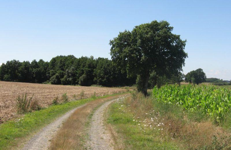 circuit-landes-laremaudiere-levignoblenantes-tourisme (4)