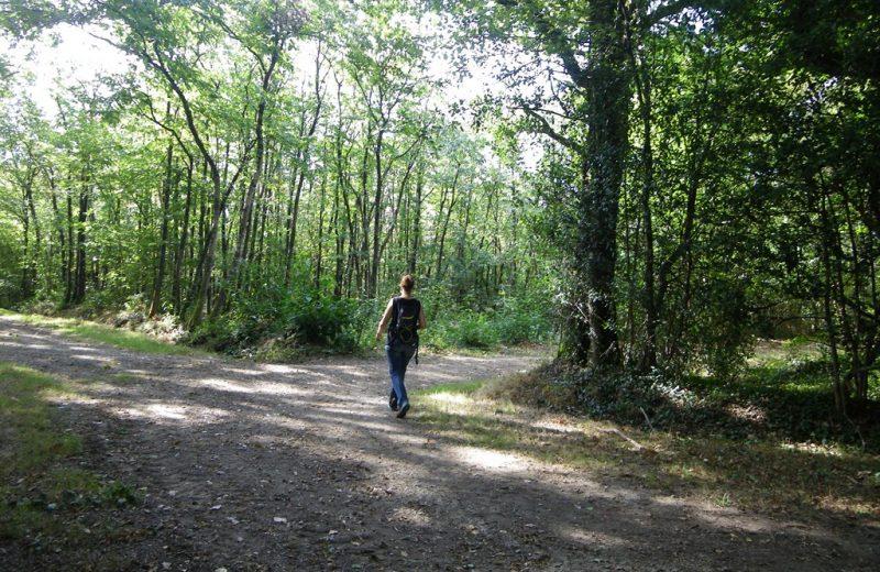 circuit-les-ombrages-le-landreau-levignoblenantes-tourisme (4)