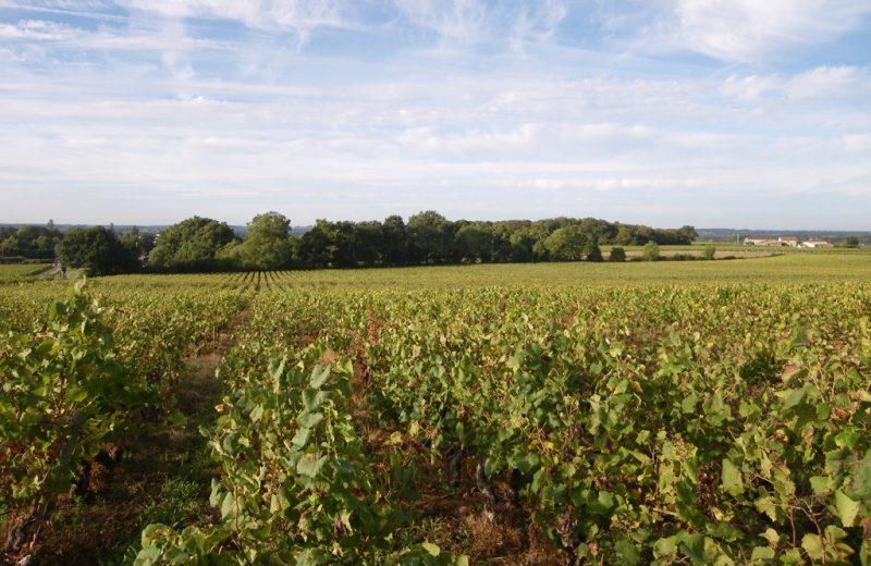 circuit-les-piliers-le-landreau-levignoblenantes-tourisme (4)