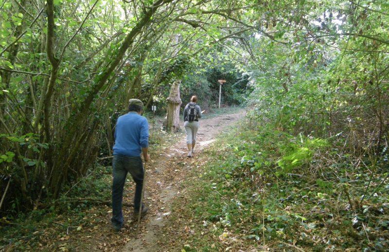 circuit-robiniere-laremaudiere-levignoblenantes-tourisme (6)