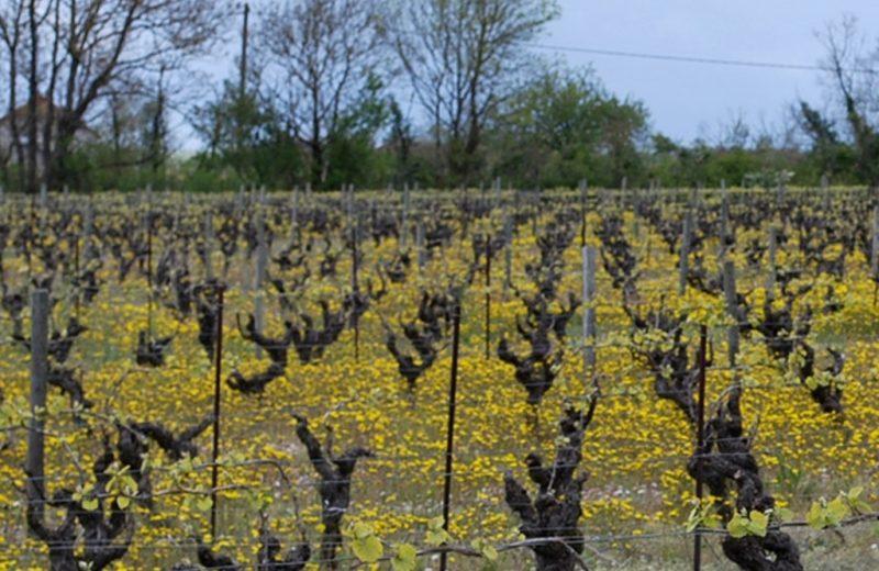 degustations-chateau-galissonniere-le-pallet-44-DEG- (8)