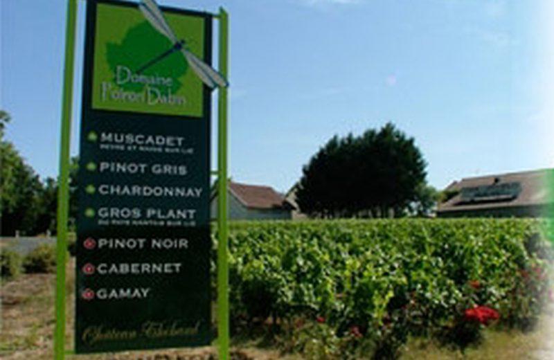 degustations-domaine-poiron-dabin–chateau-thebaud-44-DEG- (1)