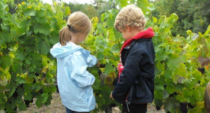 graine-de-vigneron-levignobledenantes