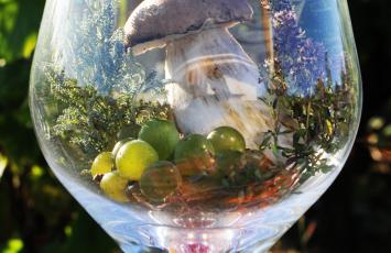 jeu des aromes domaine menard gaborit le vignoble de nantes