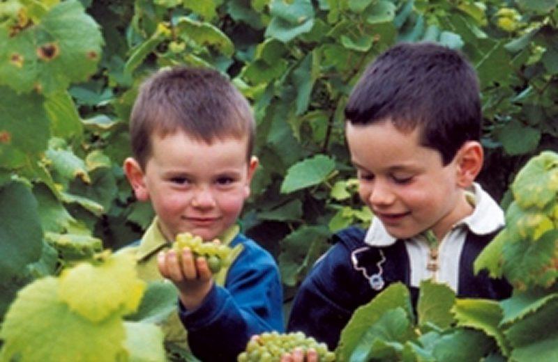 juniors metiers savoir faires le metier de vigneron