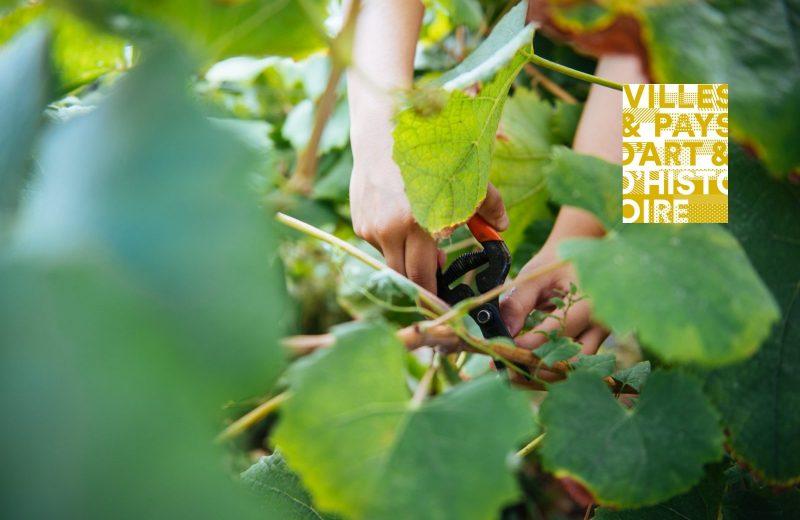juniors metiers savoir faires outils de la vigne