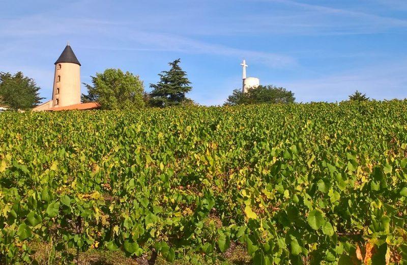 moulin-et-vignes–circuitdeshorizons-lelorouxbottereau-44-levignobledenantes-2