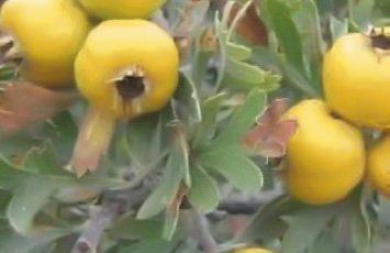 visite horticole activites groupes adultes le vignoble de nantes