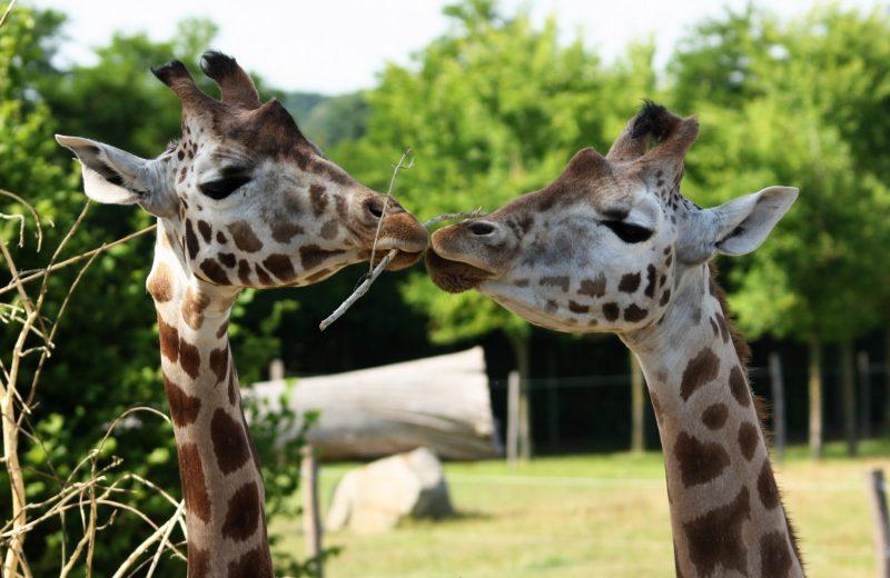 visite-spectacle-2-zoo-boissiere-2019-pages-groupes-levignobledenantes-tourisme