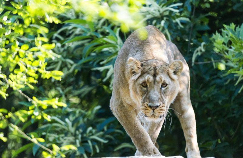 visite-spectacle-3-zoo-boissiere-2019-pages-groupes-levignobledenantes-tourisme-2