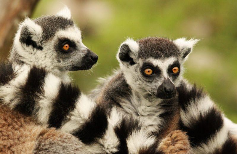 visite-spectacle-7-zoo-boissiere-2019-pages-groupes-levignobledenantes-tourisme