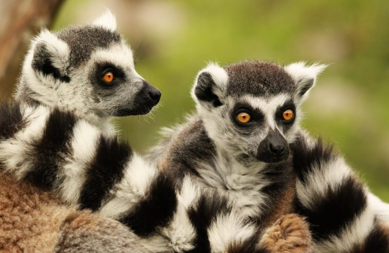 zoolanta-pages-groupes-levignobledenantes-tourisme